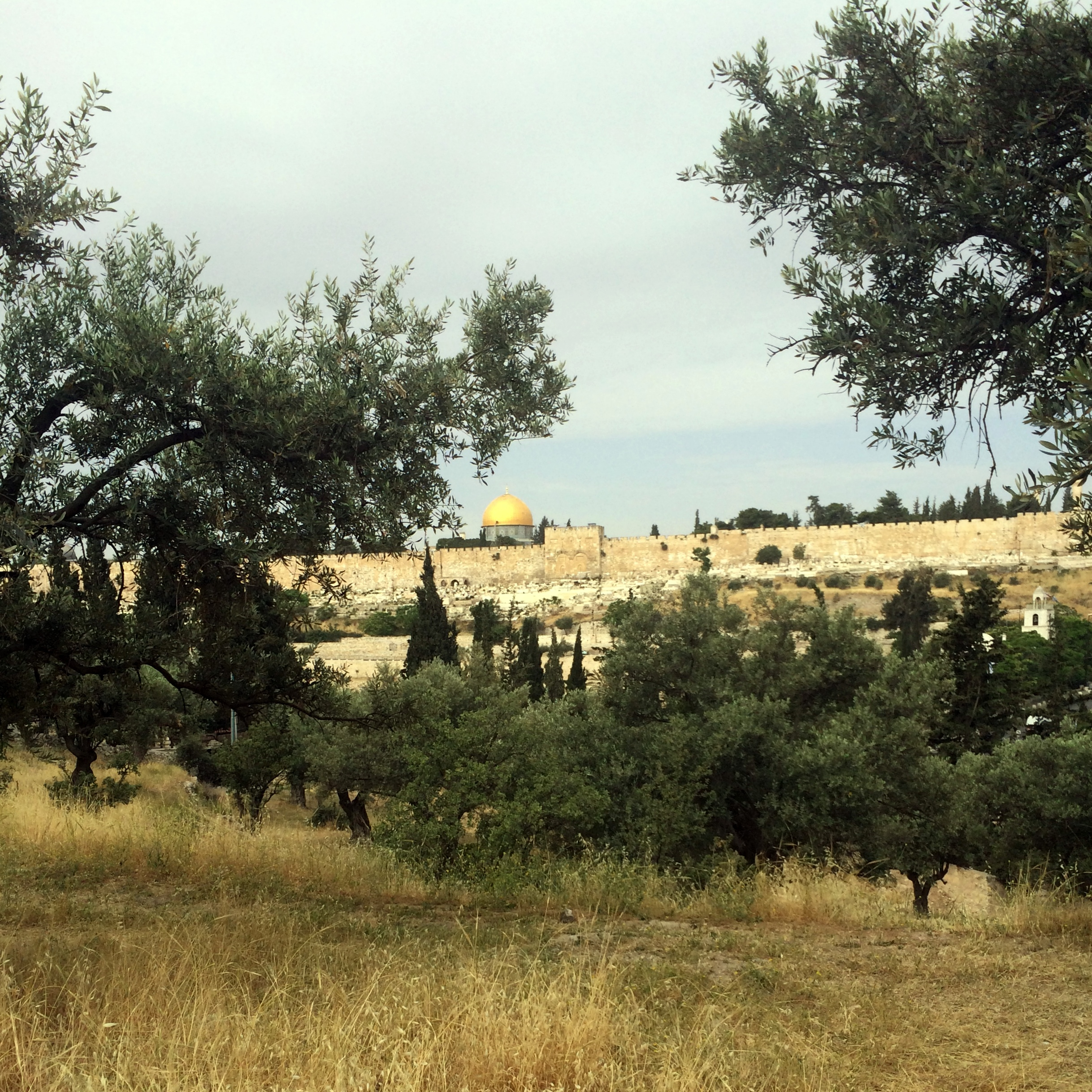 What Does The Garden Of Gethsemane Look Like Garden Ftempo