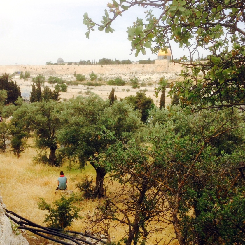 Sitting in the grove of olive trees on the Mount of Olives, with a view of Jerusalem and the Temple Mount in the background.